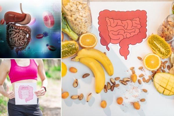 hoe versterken je darmen je immuniteit en welzijn